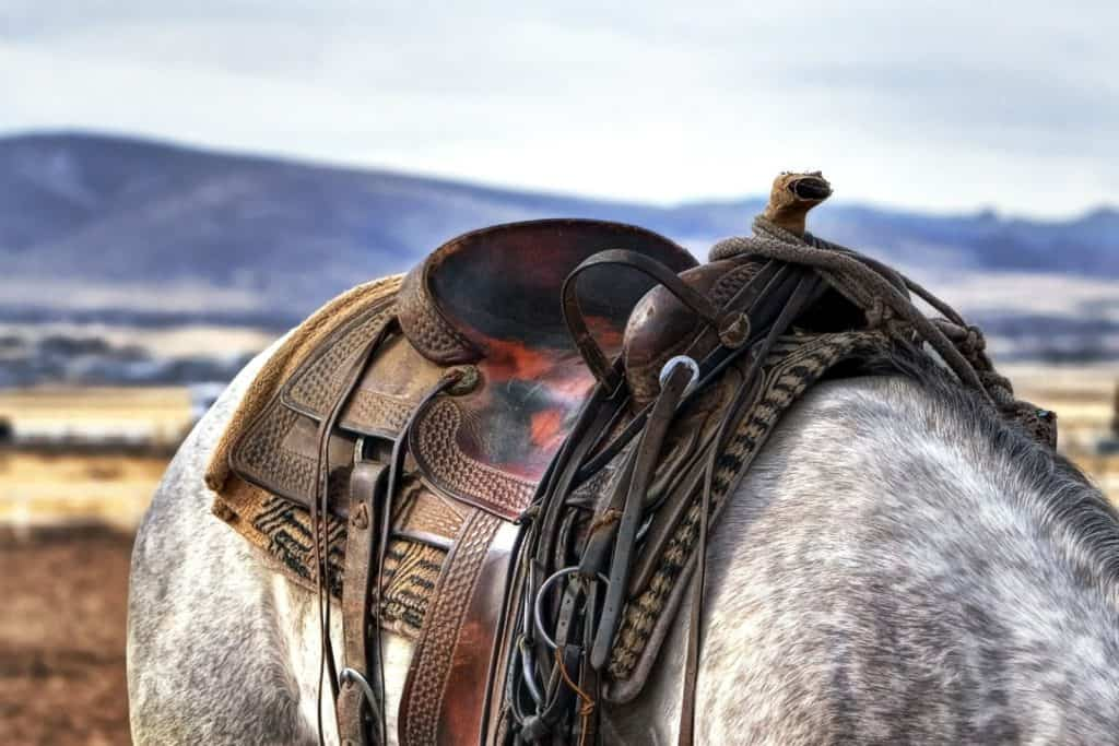 Packing Your Horse