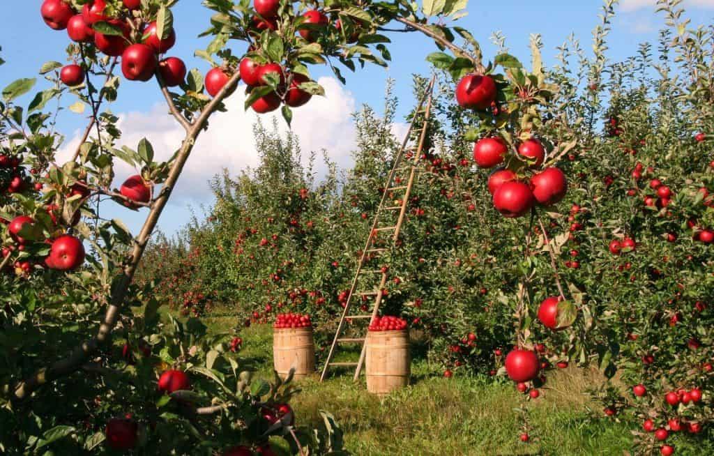 growing an orachard