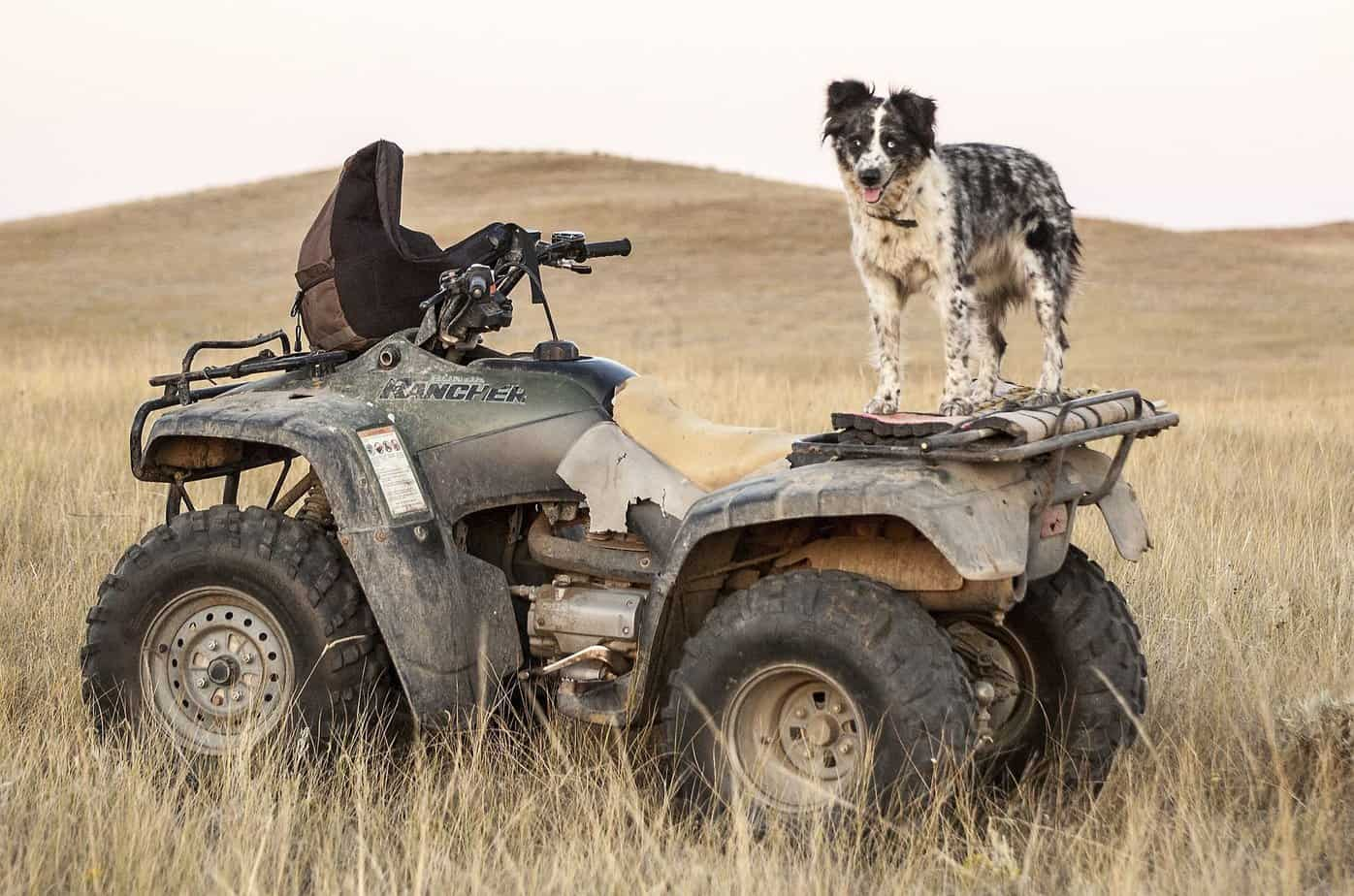 Small Vehicle Options For Hunting, Patrolling Your Property Or Bugging Out