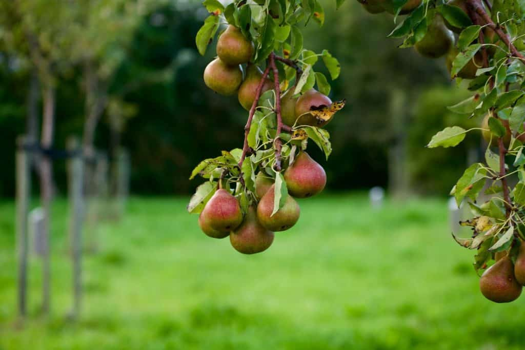 why you should plant a survival orchard