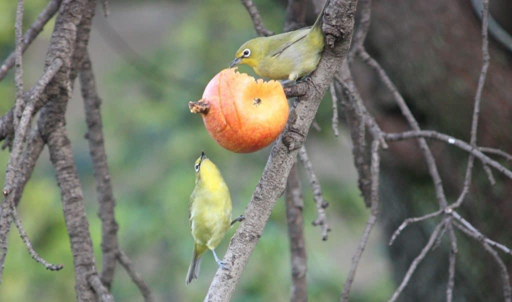 bird barriers