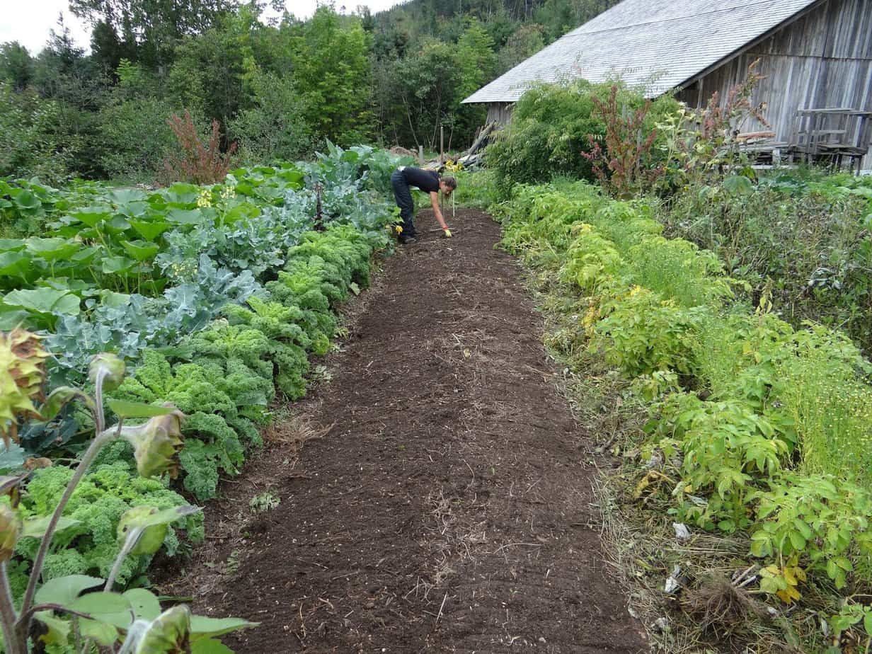 growing your own survival garden like in the old days