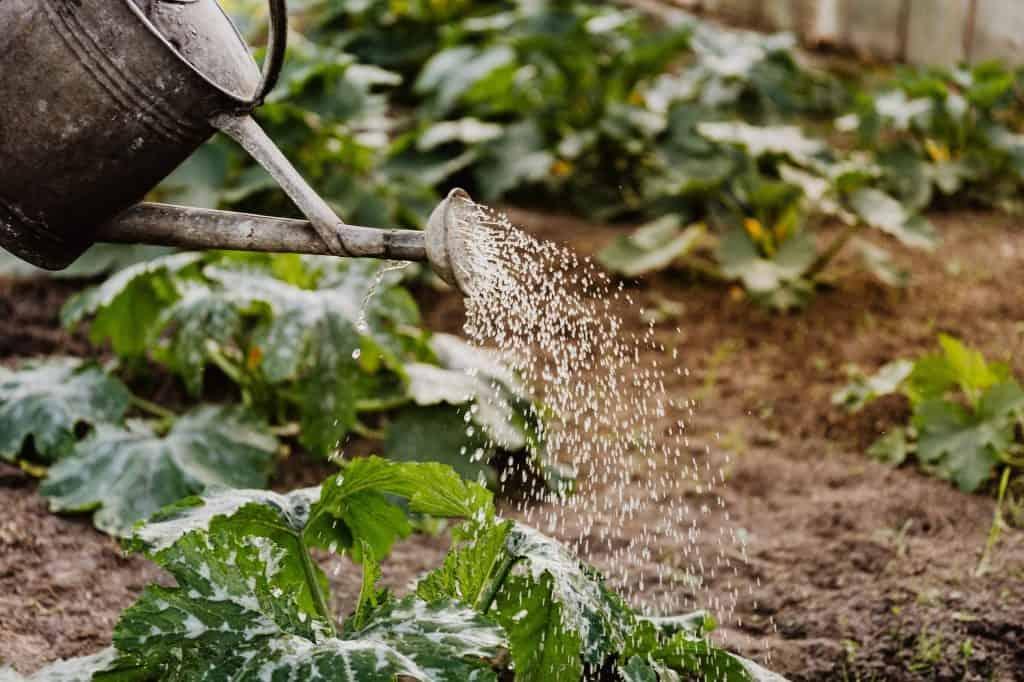 watering tips for your garden