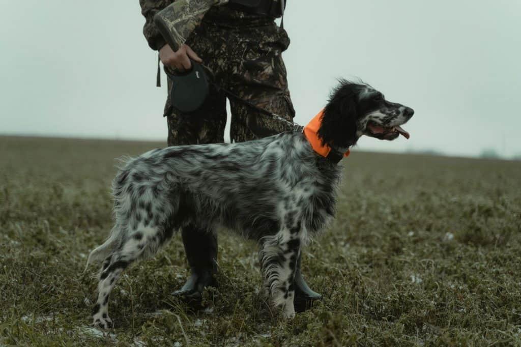 csh hunting