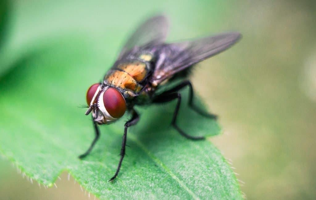 fly control using de