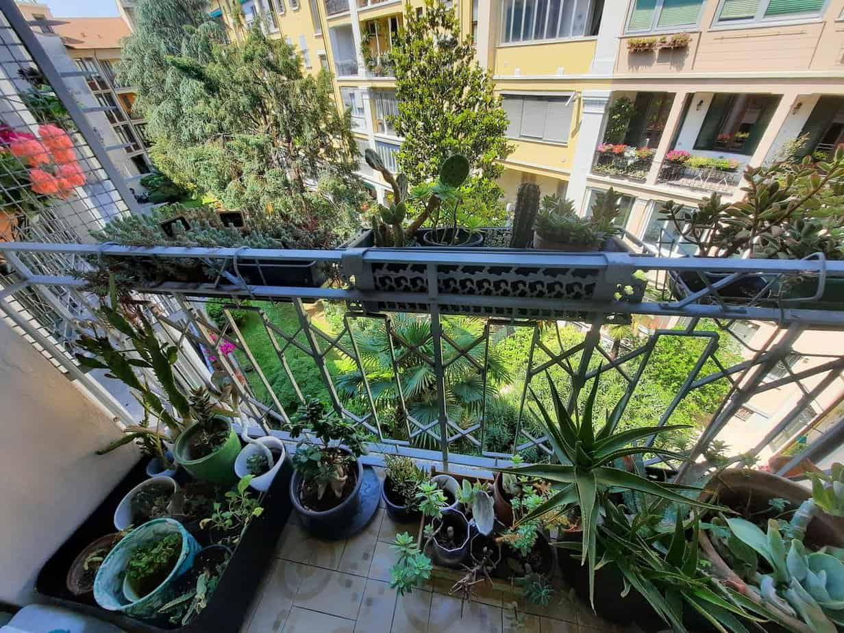 how to establish a sustainable food source on your balcony