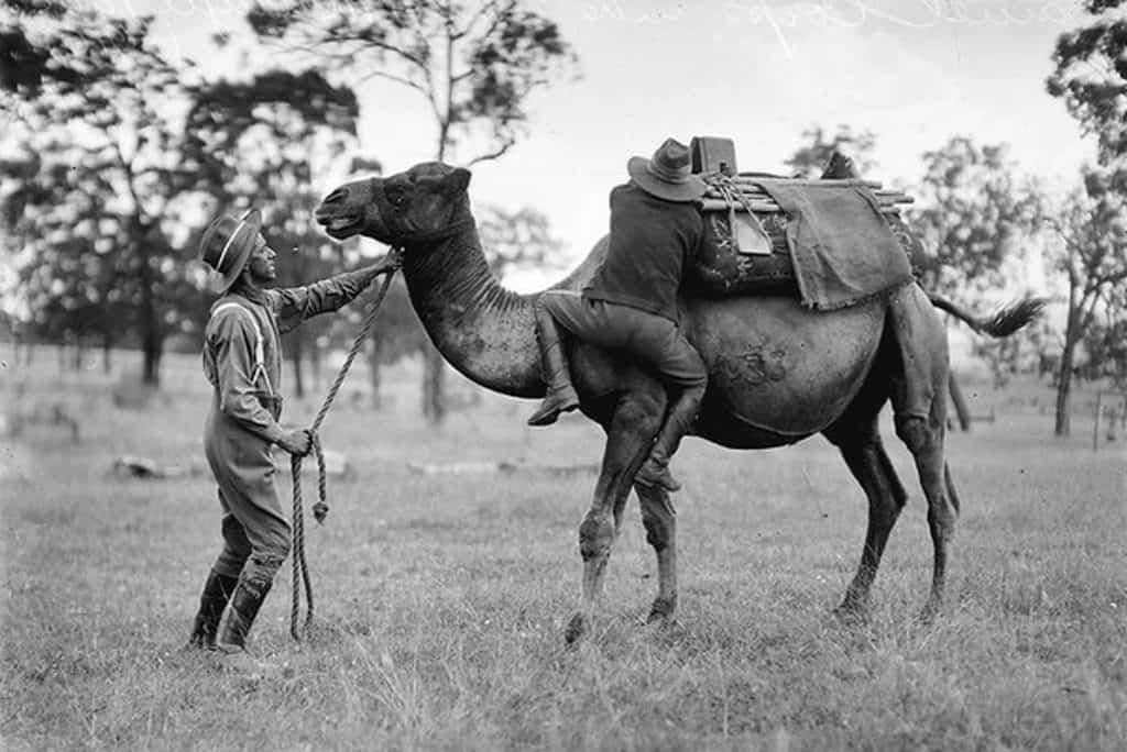 u.s. camels corps
