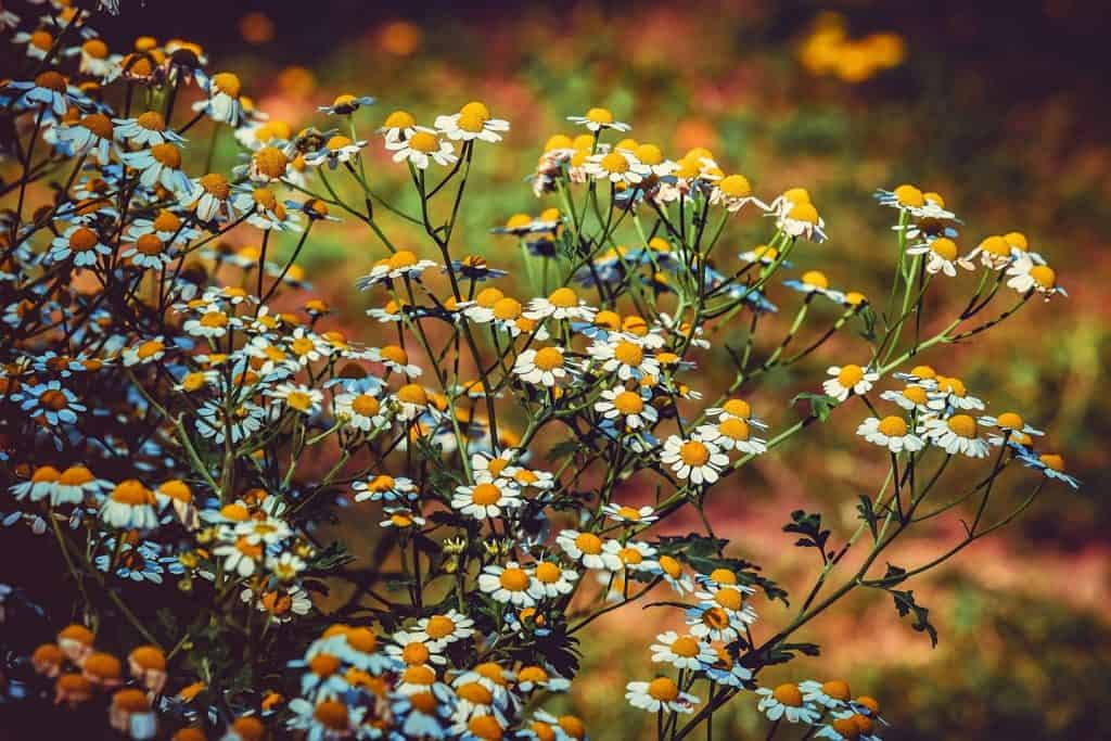why you should learn to recognize medicinal plants