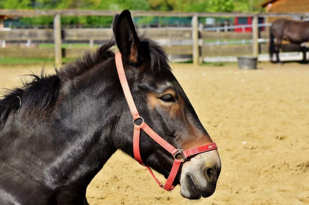 basic mule terminology