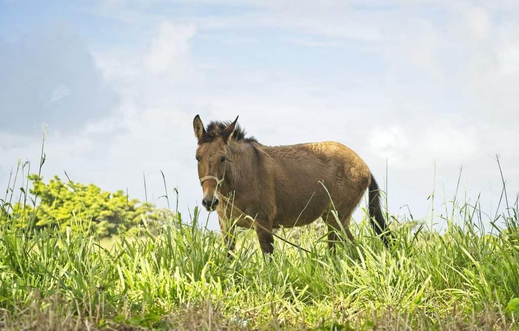 mule financials