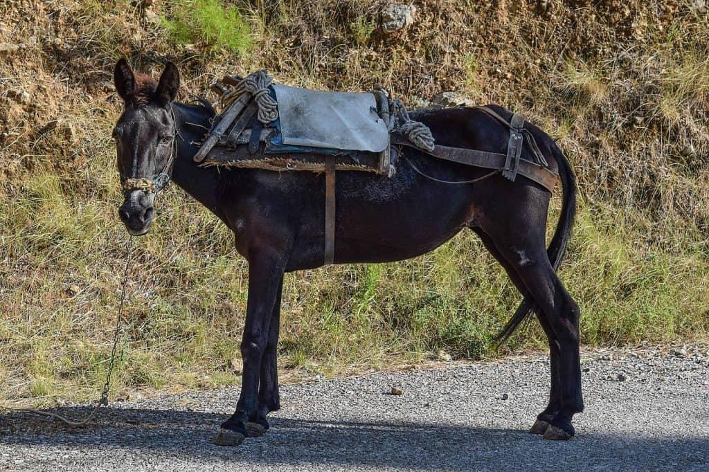 mule steering options