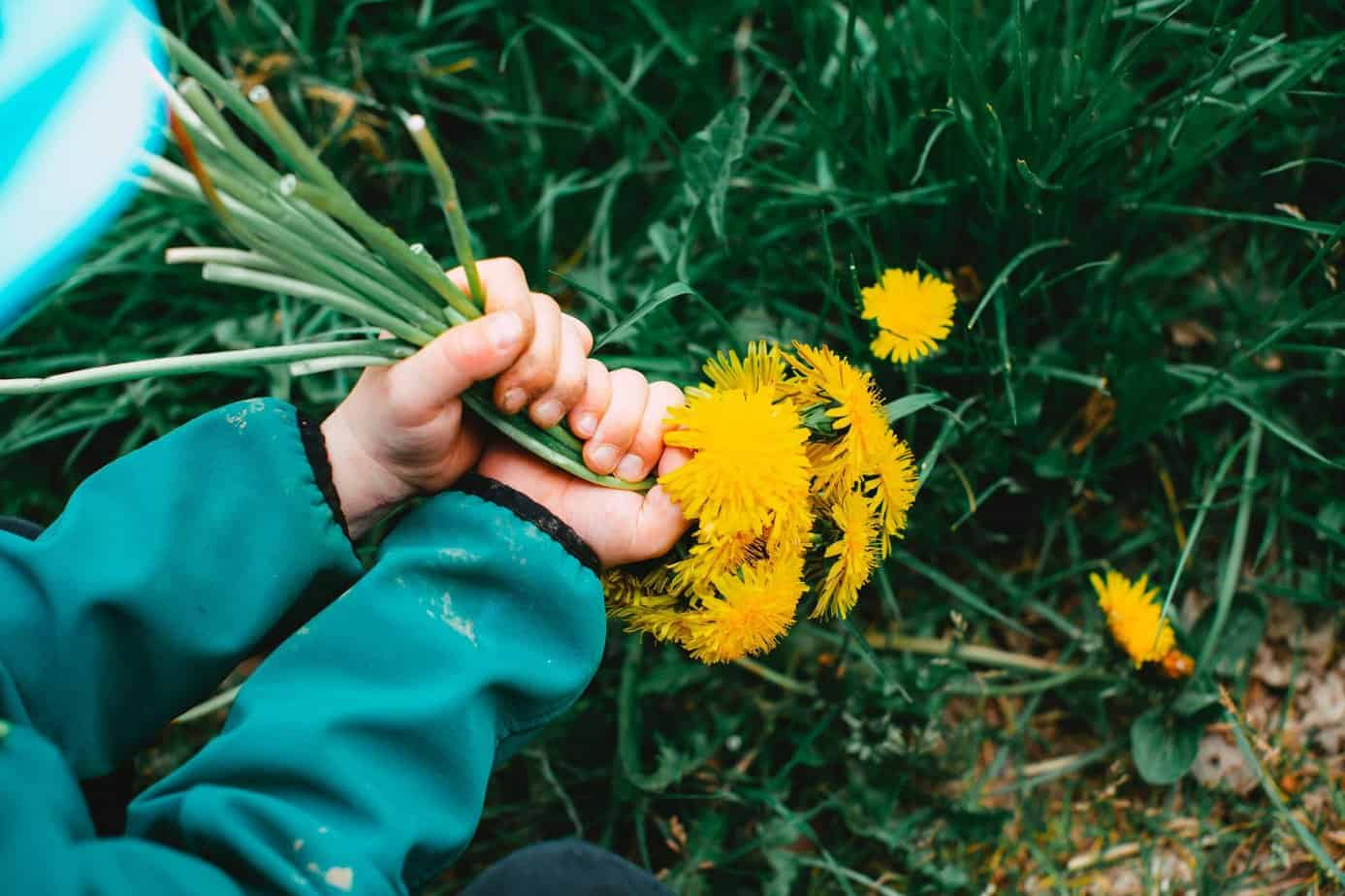 top 5 plants for urban foraging