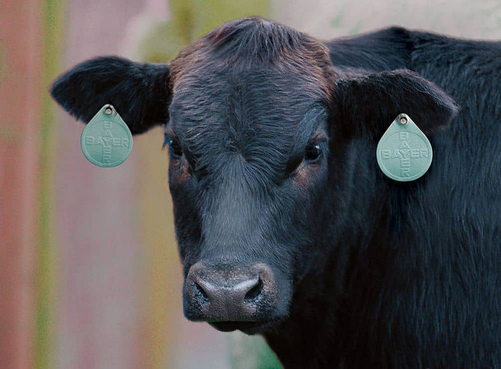 insecticide eartag