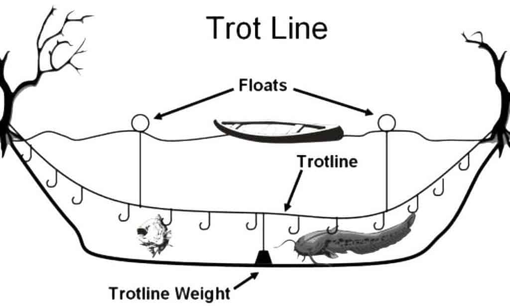 trot line