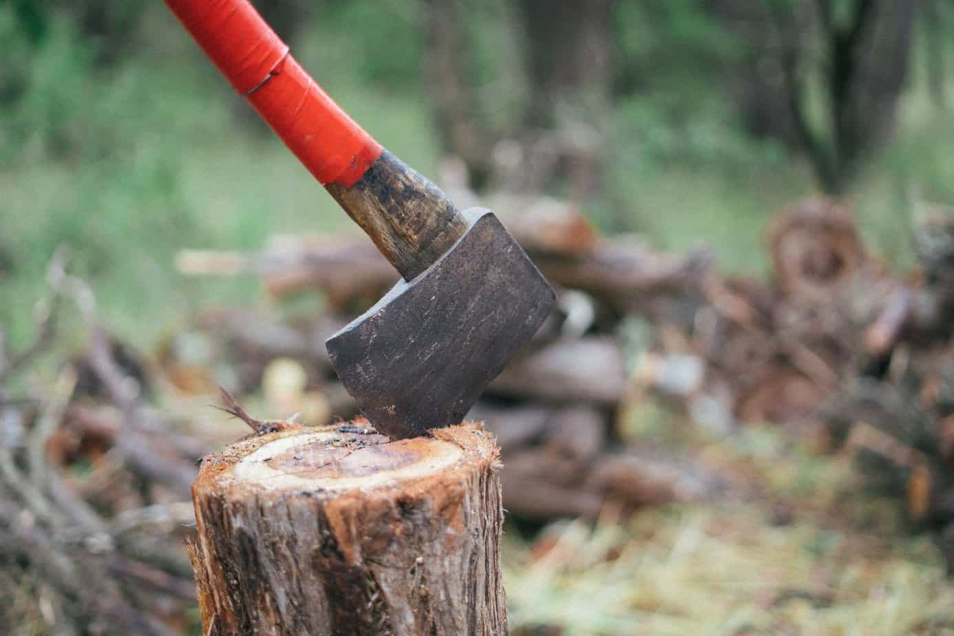 securing the best wood for fire and shelter