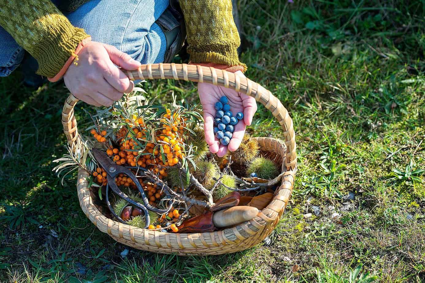 wild edibles foraging for quick meals